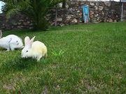 Rabbits Eating