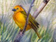 Weaver Bird Sitting on Branch
