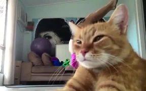 Cat Blocks Perfect Yoga Pose