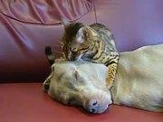 Cat Dog Massage