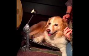 Dog Helping Play Some Music