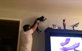 Man And Cat Team Up To Catch A Bug