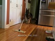 Dog Helping Out With Some Cleanup Duties