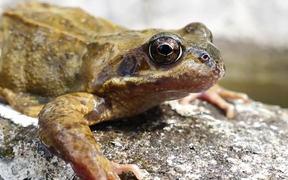 Frog Close-Up