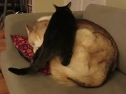 This Cat Finds An Awesome Bed
