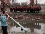 Cows Love The Didgeridoo