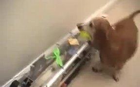 Dog Ball Fetch Machine