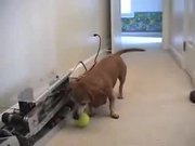 Dog Ball Fetch Machine