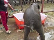 Baby Elephant Bath