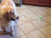 10 Cutest Golden Retriever Puppies
