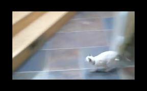 Cat Jump Fails Compilation