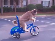 Dog Riding A Bike By Himself