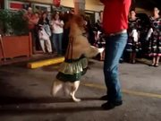 Dog Salsa Dancing
