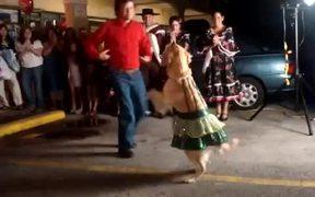 Dog Salsa Dancing