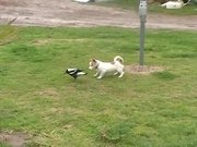 Dog Playing With A Bird