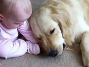 Baby Taking Bone From Golden Retriever