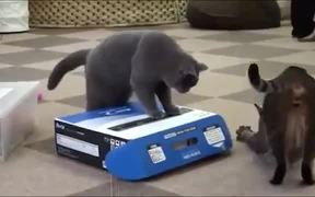 Compilation Of Cats Being Jerks