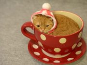 The Tea Cup Cat