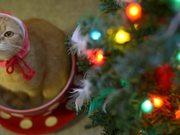 The Tea Cup Cat