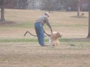 Dog Wont Leave The Park