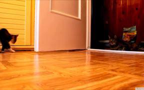 Kitten Vs Robotic Dog