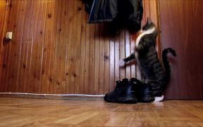 The Kangaroo Cat