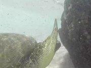 Snorkelling in Oahu