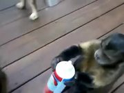 Cute Animals Eating Supercut