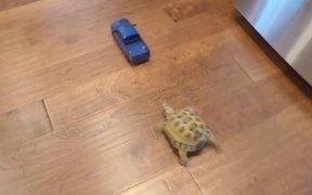 Tortoise Vs RC Truck
