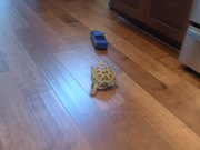 Tortoise Vs RC Truck