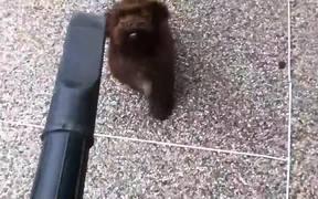 Puppy Vs Leaf Blower