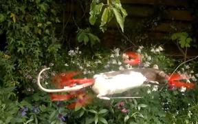 Flying Rat Copter