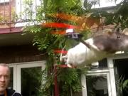 Flying Rat Copter