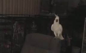 This Bird Can Dance