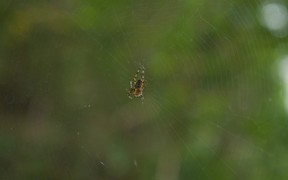Spider Shaking its Web
