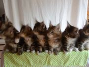 Head Bobbing Kittens
