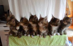 Head Bobbing Kittens
