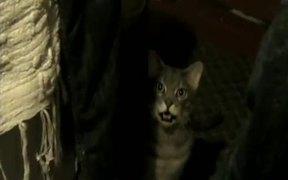 Hey Hey Hey Cat