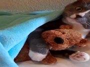 Cute Kitty With Teddy Bear