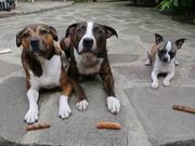 3 Dogs 3 Sausages