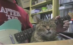 Snaggletooth Cat Bopping Along