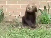 Sneezing Bear