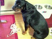 Top 10 Guiltiest Dogs