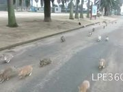 The Bunny Stampede