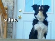 Amazing Border Collie Tricks
