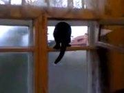 Double Agent Cat