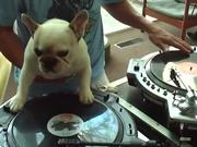 DJ Doggy Dog