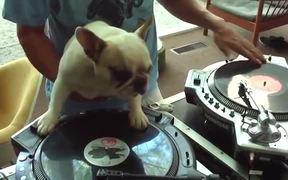 DJ Doggy Dog