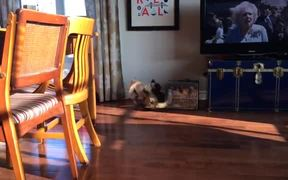 Pug Vs Cat Battle