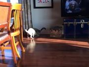 Pug Vs Cat Battle